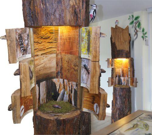 drzewo-pelne-zycia-pomoce-edukacyjne