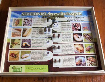tablice-entomologiczne-szkodniki-drzew-lisciastych
