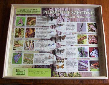 tablice-entomologiczne-szkodniki-pierwotne-drzewostanow-iglastych