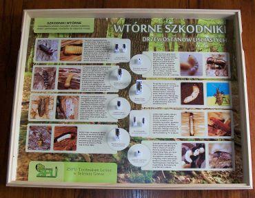 tablice-entomologiczne-szkodniki-pwtorne-drzewostanow-lisciastych